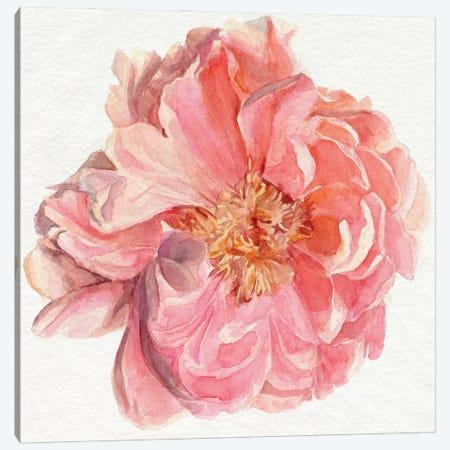 Blossomed Peony I Canvas Print #JPP524} by Jennifer Paxton Parker Canvas Wall Art