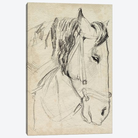 Horse in Bridle Sketch I Canvas Print #JPP608} by Jennifer Paxton Parker Canvas Wall Art