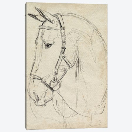 Horse in Bridle Sketch II Canvas Print #JPP610} by Jennifer Paxton Parker Canvas Print