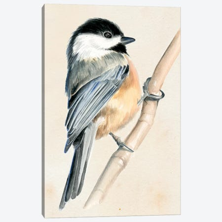 Little Bird On Branch II Canvas Print #JPP6} by Jennifer Paxton Parker Art Print