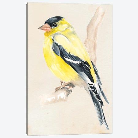 Little Bird On Branch III Canvas Print #JPP7} by Jennifer Paxton Parker Art Print