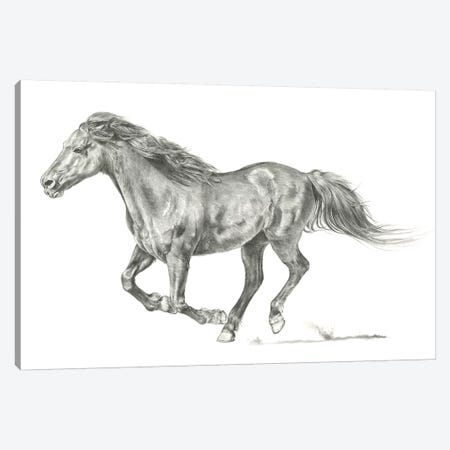 Wild Horse Portrait I Canvas Print #JPP87} by Jennifer Paxton Parker Canvas Wall Art