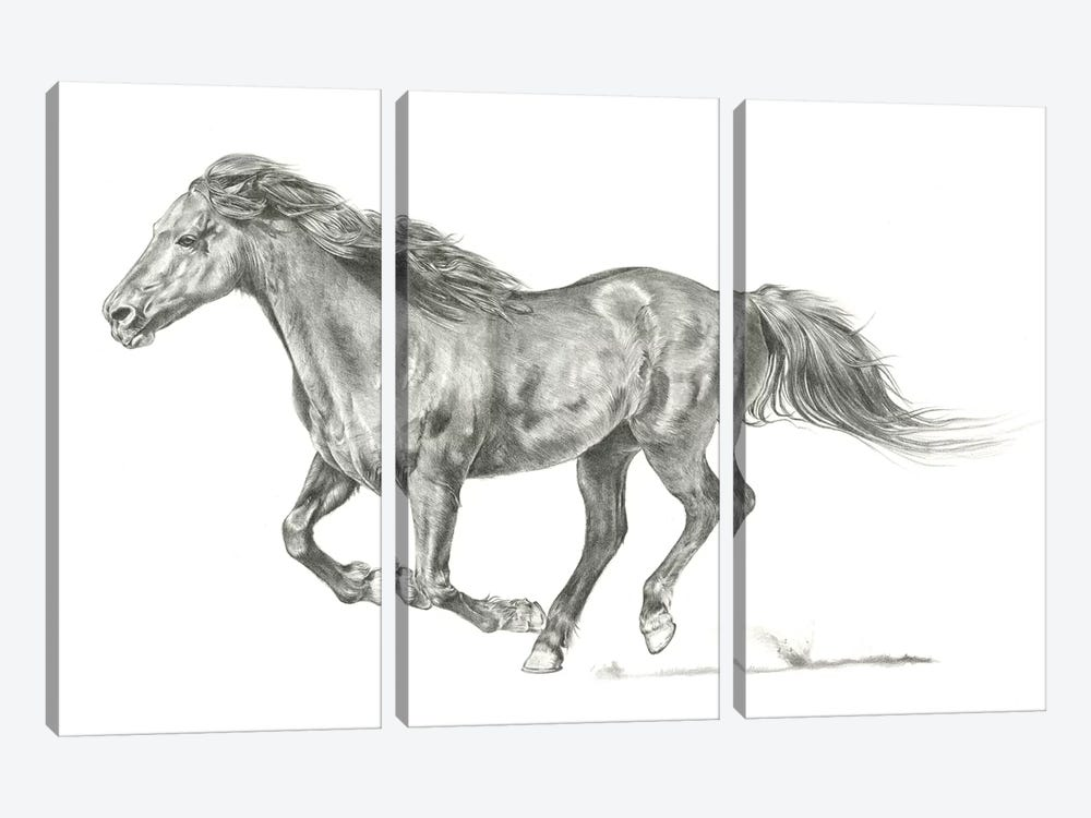 Wild Horse Portrait I by Jennifer Paxton Parker 3-piece Canvas Print