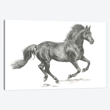 Wild Horse Portrait II Canvas Print #JPP88} by Jennifer Paxton Parker Canvas Print