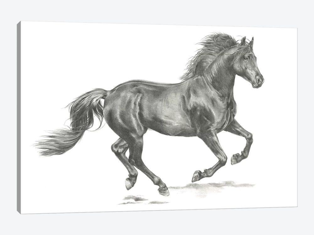 Wild Horse Portrait II by Jennifer Paxton Parker 1-piece Canvas Artwork