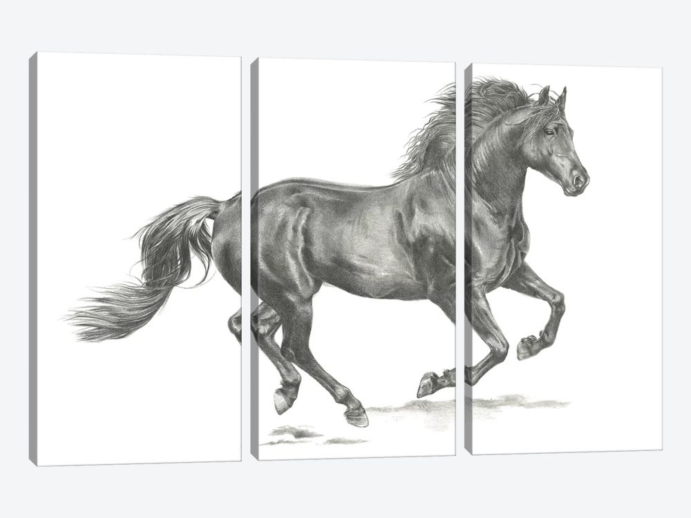Wild Horse Portrait II by Jennifer Paxton Parker 3-piece Canvas Art