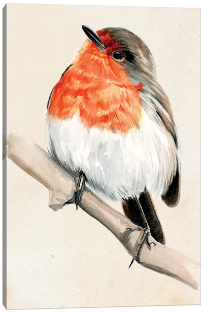 Little Bird On Branch IV Canvas Art Print