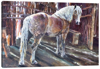 Sheltering in the Old Barn Canvas Art Print