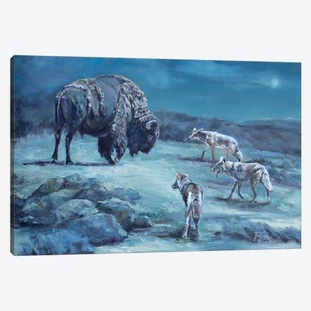 The Old Bull Canvas Print #JPR20} by Jan Perley Art Print