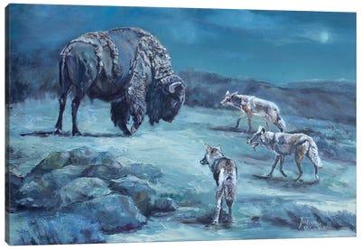 The Old Bull Canvas Art Print