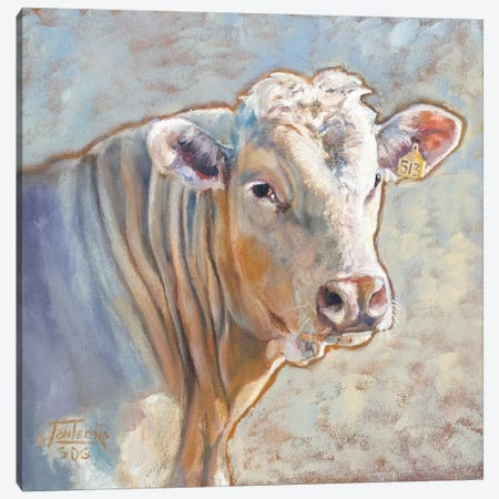 Charolais Canvas Print #JPR4} by Jan Perley Art Print