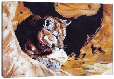 Drowsing at Redrock Canvas Art Print
