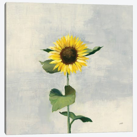 Sunny Blooms II Canvas Print #JPU100} by Julia Purinton Art Print