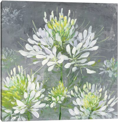 Farmhouse Cleome I Canvas Art Print