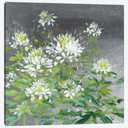 Farmhouse Cleome II 3-Piece Canvas #JPU13} by Julia Purinton Canvas Art Print