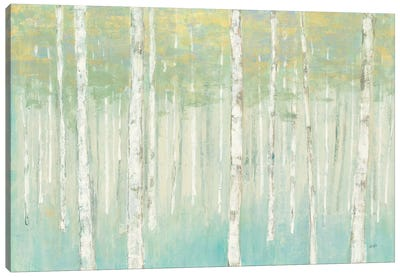 Birches at Sunrise Canvas Art Print