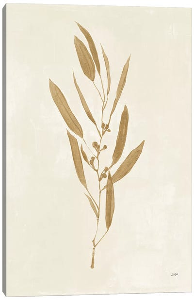Botanical Study I Gold Canvas Art Print