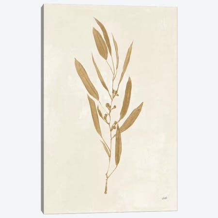 Botanical Study I Gold Canvas Print #JPU66} by Julia Purinton Art Print