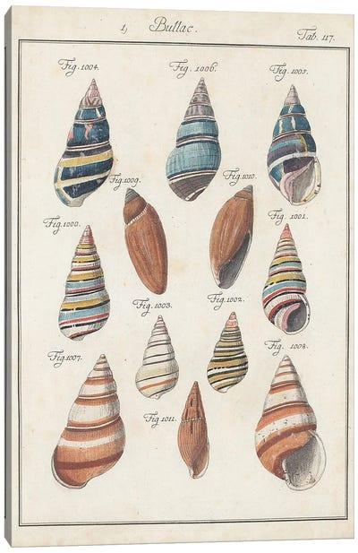 Antique Shell Pair I Canvas Art Print