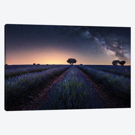 Lavender Fields Canvas Print #JRD13} by Jorge Ruiz Dueso Canvas Art Print