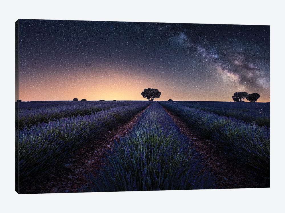 Lavender Fields by Jorge Ruiz Dueso 1-piece Canvas Artwork
