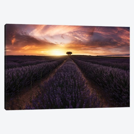 Lavender Sunset Canvas Print #JRD6} by Jorge Ruiz Dueso Canvas Wall Art