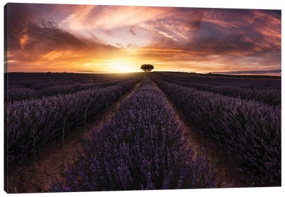 Lavender Sunset Canvas Art Print
