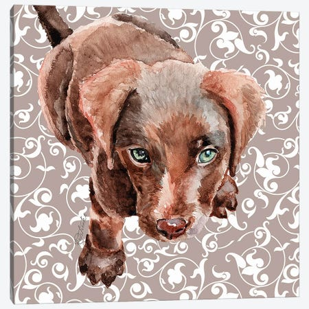 Chocolate Lab Puppy Canvas Print #JRE107} by Jennifer Redstreake Art Print