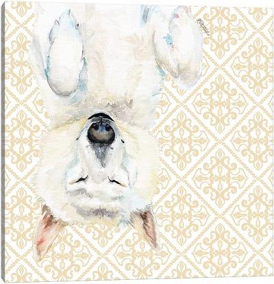 White Husky Canvas Art Print
