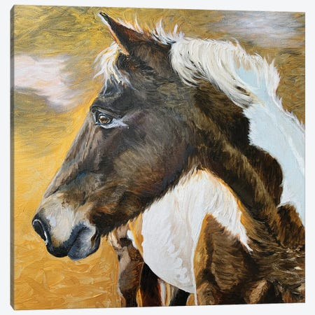 Wild Pony II Canvas Print #JRE139} by Jennifer Redstreake Art Print