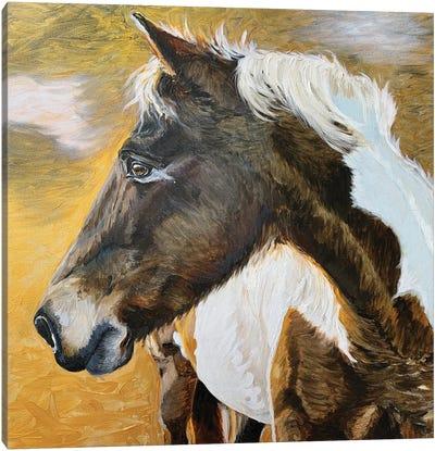 Wild Pony II Canvas Art Print