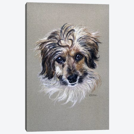 Adorable Fuzzy Face Canvas Print #JRE61} by Jennifer Redstreake Art Print