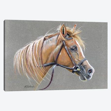 Arabian Horse Canvas Print #JRE62} by Jennifer Redstreake Canvas Print