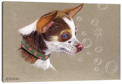 Chihuahua Canvas Art Print