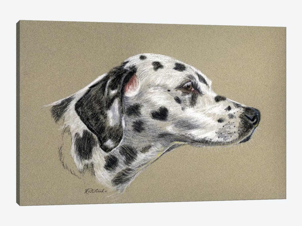 Dalmatian Luv by Jennifer Redstreake 1-piece Canvas Wall Art