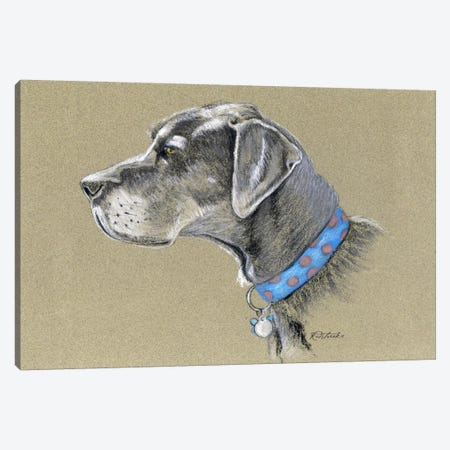 Great Dane Canvas Print #JRE74} by Jennifer Redstreake Canvas Print