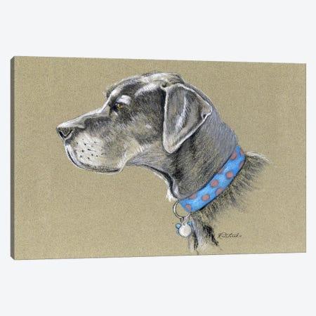 Great Dane Canvas Print #JRE74} by Jennifer Redstreake Canvas Print