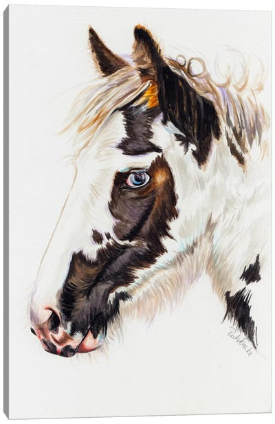 Gypsy Filly Canvas Art Print