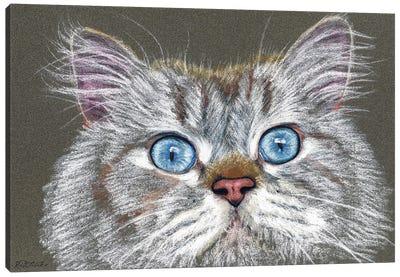 Surprised Cat Canvas Art Print