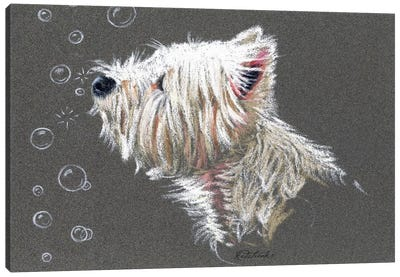 Westie Bubbles Canvas Art Print