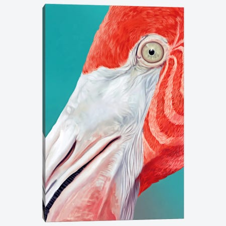 Flamingo Canvas Print #JRI59} by Giulio Rossi Canvas Art