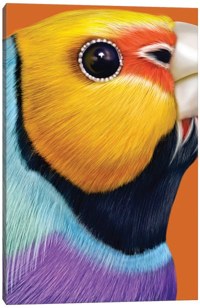 Gouldian Finch Canvas Art Print