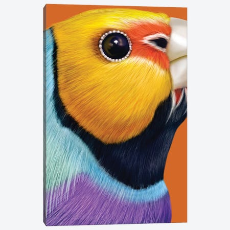 Gouldian Finch Canvas Print #JRI60} by Giulio Rossi Canvas Print