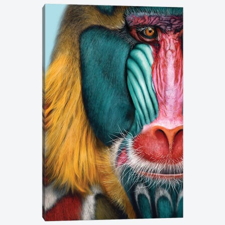 Mandrill Canvas Print #JRI63} by Giulio Rossi Art Print