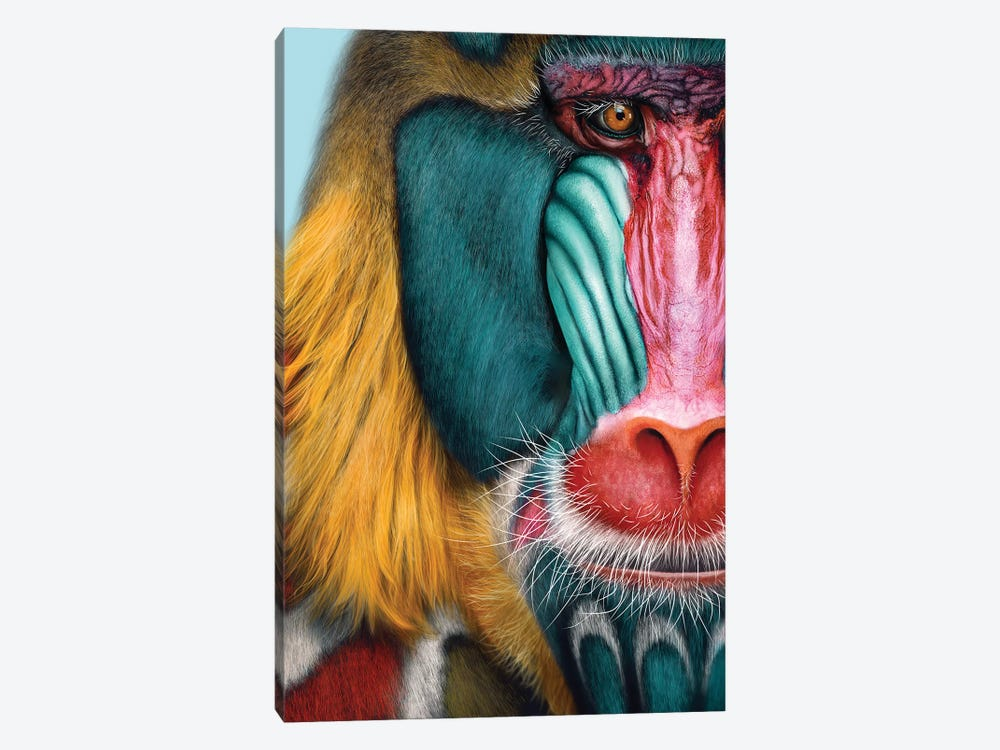 Mandrill by Giulio Rossi 1-piece Canvas Artwork