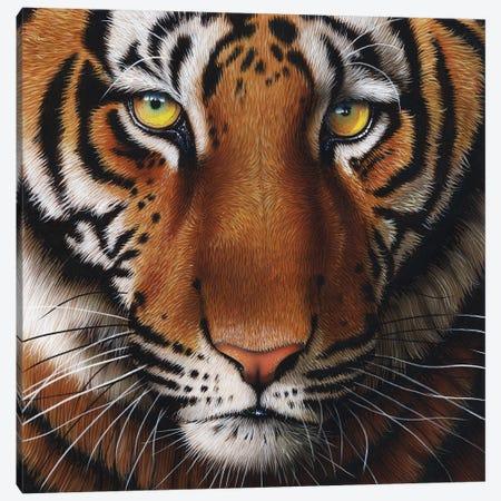 Tiger Canvas Print #JRK23} by Jurek Art Print