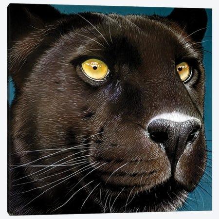 Black-Panther Canvas Print #JRK5} by Jurek Canvas Art Print