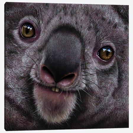 Koala Canvas Print #JRK8} by Jurek Canvas Artwork