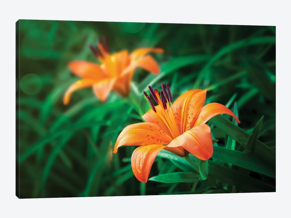 Tiger Lilies by Jonathan Ross Photography 1-piece Art Print