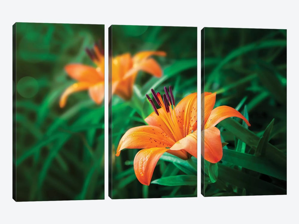 Tiger Lilies by Jonathan Ross Photography 3-piece Art Print